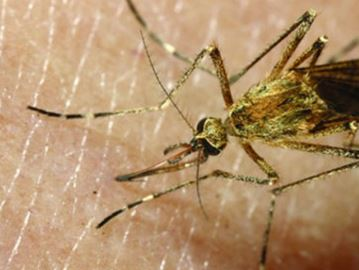 Health officials say Milton residents not at risk of contracting Zika virus – at home