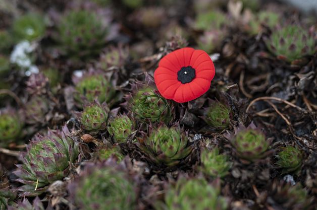 Remembrance Day events in Ancaster, Dundas, Hamilton Mountain and Stoney Creek
