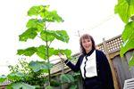 Orangeville's mystery plant