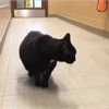 Adopt-A-Pet: Giza is looking for a place to call home