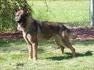 Police dog gets new posting after partner slain-Image1