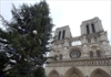 Who's behind Christmas tree at Paris' Notre Dame?-Image1
