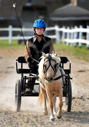 Laurann Stavinga guides Gunner around a course during a miniature horse competition.