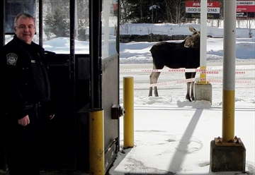 In this Dec. 1, 2016 photo provided by U.S. Customs and Border Protection, a moose stands at the border crossing station between the U.S. and Canada at Norton, Vt., manned by agent Mario Marquis, left. The agency is offering financial incentives for people willing to work at 21 remote border crossings across the country, including Norton. (U.S. Customs and Border Protection via AP)