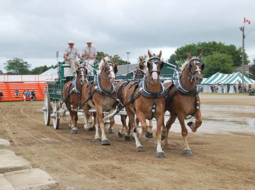 Canadian National Draft Horse Exhibition
