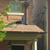 Peacock on the loose in Toronto's west end-Image1