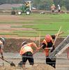 Field revitalization