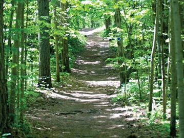 Sections of Durham Forest trails closed this fall for maintenance and to promote forest health