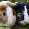 Basil and Bertie