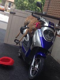More animal cruelty incidents in Orangeville neighbourhhod