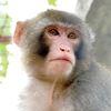 Darwin the monkey's guitar