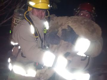 Calf rescued from blaze