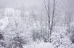 Winter fun at Scanlon