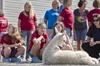 PHOTOS: Campers visit alpaca farm