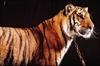 Bowmanville Zoo to close at end of season-Image1