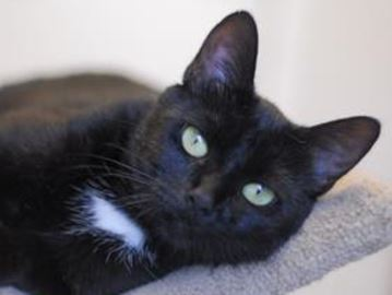 Lots of kittens for adoption at Alliston shelter