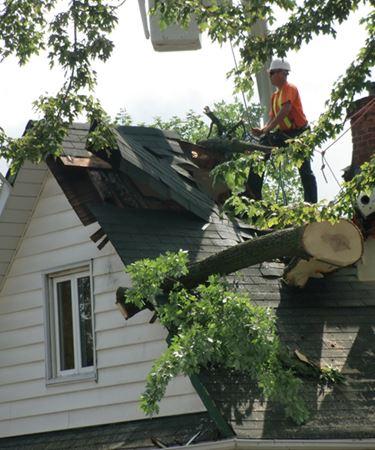 Tree on Lindsay home