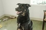 Adopt A Pet: Titus
