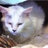 Adopt A Pet: Misty needs a home