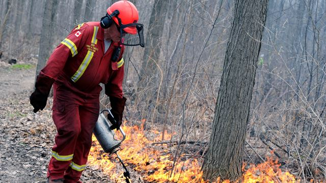 Updated: Controlled burning cleanses Oakville's Iroquois Shoreline Woods