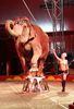 Shrine Circus 2014