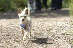Off-Leash dog park idea