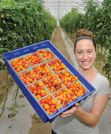'Normal' summer has crops coming in on schedule in Barrie and Innisfil