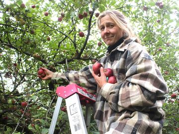 Wellesley apple grower