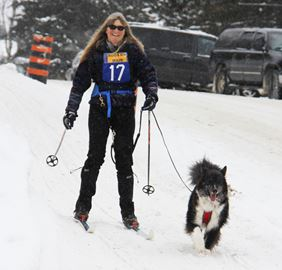 The Kearney Dog Sled Races celebrated 20 years on Feb. 8 and 9 and organizers, countless volunteers, mushers and many dogs did not disappoint.