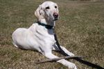 Lower Stoney Creek dog park update