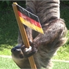Bob the Sloth picks Germany to win World Cup