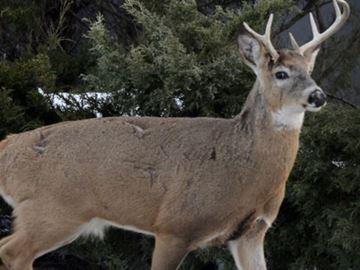 Deer crash