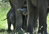 VIDEO: Baby elephants