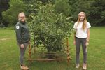 Going above and beyond to protect memorial trees at Ball's Falls