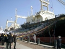 Japanese whaling fleet set to leave for Antarctic-Image1