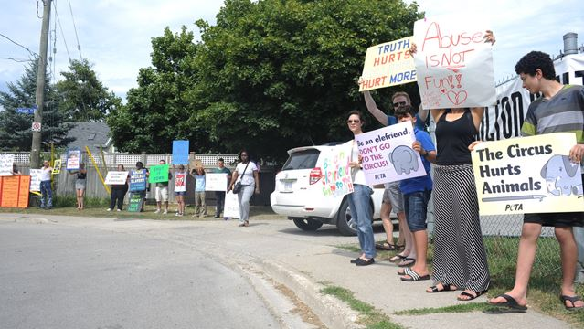 Milton circus protests regarding animal abuse