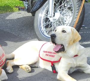 Motorcycle ride will raise funds for training guide dogs– Image 1