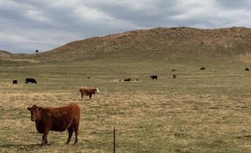 Obama KXL claim debunked in a Montana field-Image1