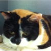 Affectionate Chelsea needs a home