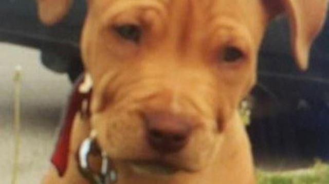 Puppy snatched
