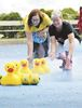 Duck Derby at Lindsay Ribfest