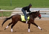 Stanley Cup to visit Kentucky Derby contender Nyquist-Image1