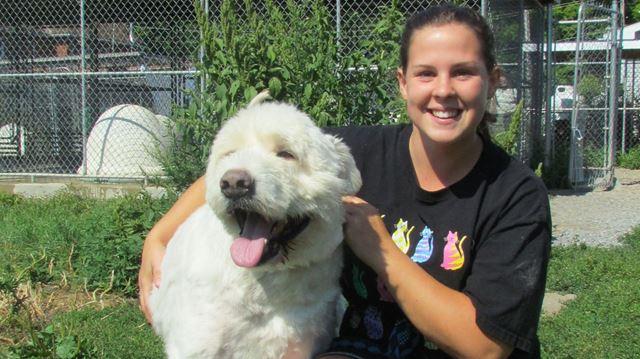 Local dog's neglect makes news worldwide– Image 1