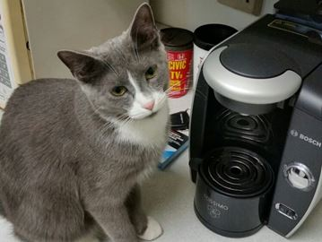 Oakville woman looking for missing cat