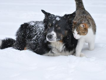 Dog and cat play in the snow.