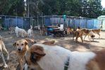 Dog days for horses
