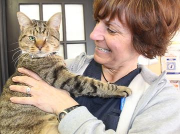Wasaga cat rescue disappointed in funding decision