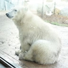 Toronto Zoo: Baby polar bear Juno is 'full of personality'
