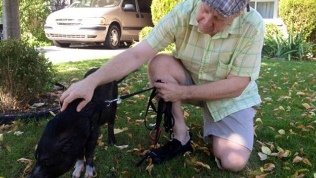 chef the pot belly pig has to get out of town � but he