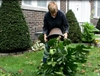 VIDEO: Wrestling a Philodendron